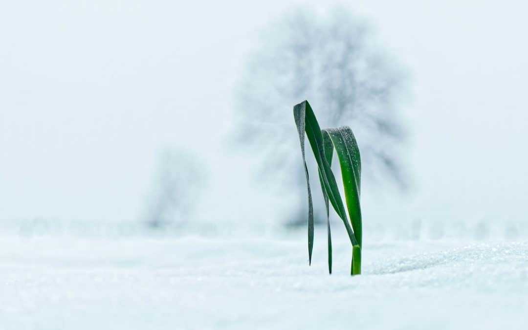 Living In Harmony With The Winter Season